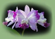 Shop our store for Orchids
